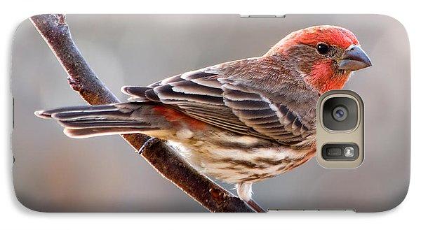 House Finch Galaxy S7 Case by Betty LaRue