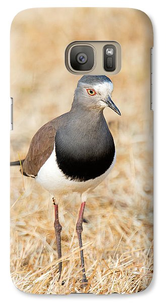African Wattled Lapwing Vanellus Galaxy S7 Case by Panoramic Images