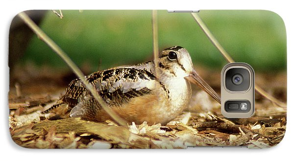 American Woodcock Galaxy S7 Case by John Burk