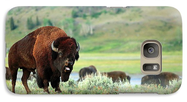 Angry Buffalo Galaxy Case by Todd Klassy