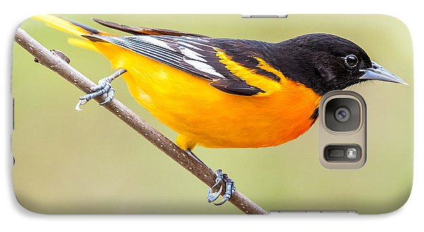 Baltimore Oriole Galaxy S7 Case by Paul Freidlund