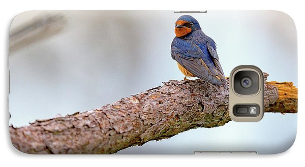 Barn Swallow On Assateague Island Galaxy Case by Rick Berk