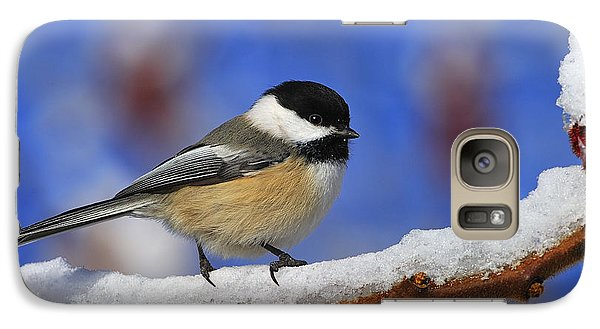 Black-capped Chickadee In Sumac Galaxy S7 Case by Tony Beck