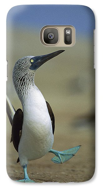 Blue-footed Booby Sula Nebouxii Galaxy S7 Case by Tui De Roy