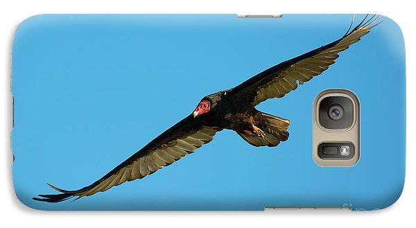 Buzzard Circling Galaxy S7 Case by Mike Dawson