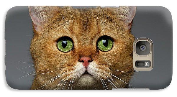 Closeup Golden British Cat With  Green Eyes On Gray Galaxy Case by Sergey Taran