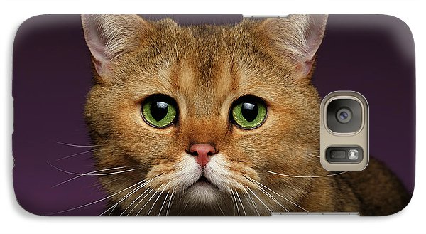 Closeup Golden British Cat With  Green Eyes On Purple  Galaxy Case by Sergey Taran