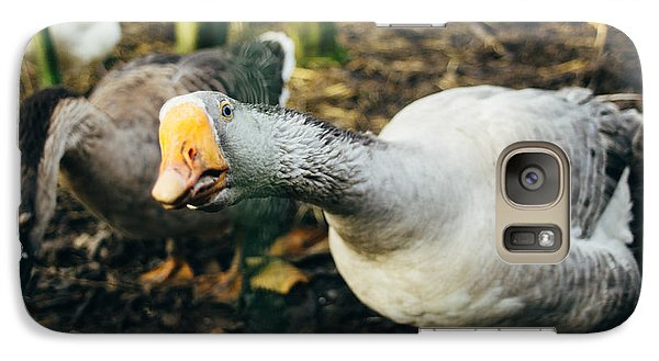 Curious Grey Goose Galaxy Case by Pati Photography