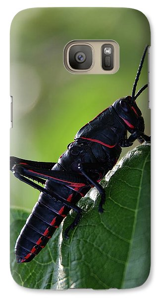 Eastern Lubber Grasshopper Galaxy Case by Richard Rizzo