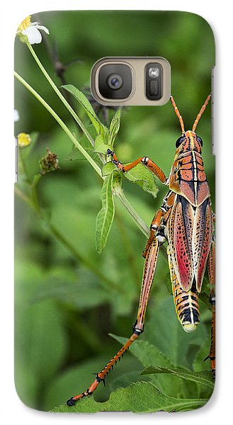 Eastern Lubber Grasshopper  Galaxy S7 Case by Saija  Lehtonen