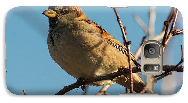 Female House Sparrow Galaxy Case by Mike Dawson