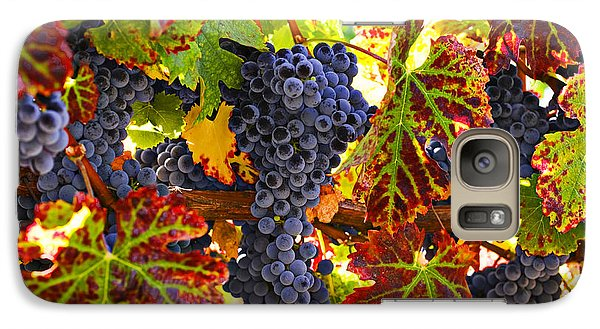 Grapes On Vine In Vineyards Galaxy Case by Garry Gay