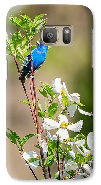 Indigo Bunting In Flowering Dogwood Galaxy Case by Bill Wakeley