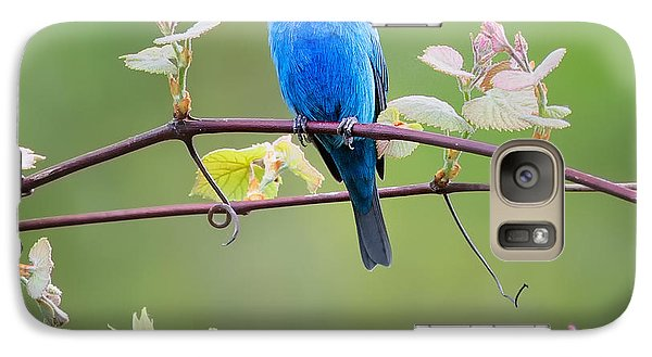 Indigo Bunting Perched Square Galaxy S7 Case by Bill Wakeley