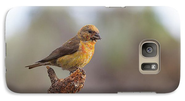 Juvenile Male Red Crossbill Galaxy S7 Case by Doug Lloyd