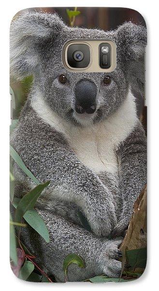 Koala Phascolarctos Cinereus Galaxy S7 Case by Zssd