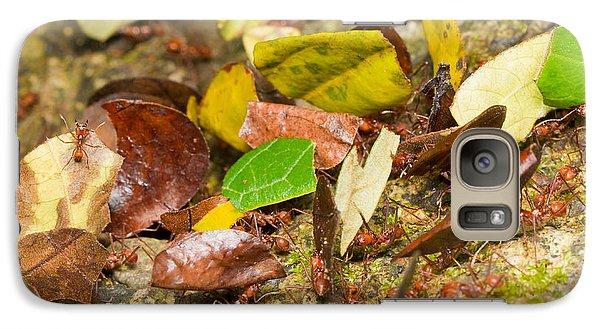 Leaf-cutter Ants Galaxy S7 Case by B.G. Thomson