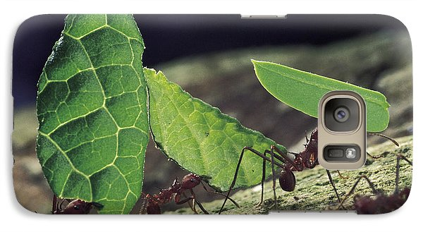 Leafcutter Ant Atta Cephalotes Workers Galaxy Case by Mark Moffett