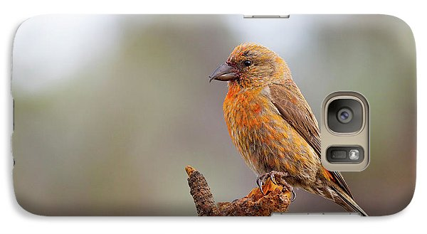 Male Red Crossbill Galaxy S7 Case by Doug Lloyd