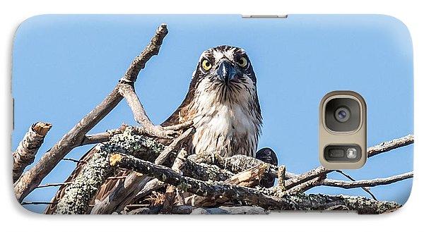Osprey Eyes Galaxy Case by Paul Freidlund
