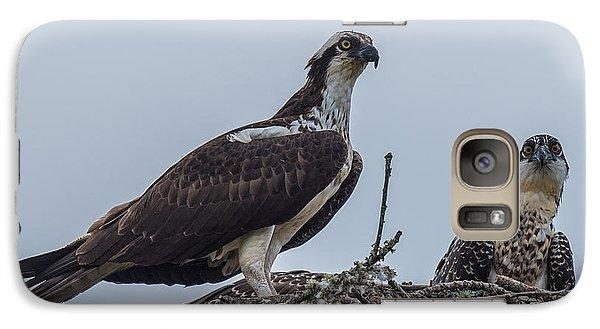 Osprey On A Nest Galaxy Case by Paul Freidlund