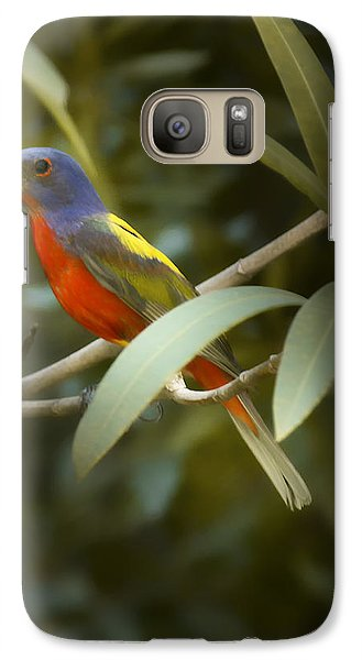 Painted Bunting Male Galaxy Case by Phill Doherty