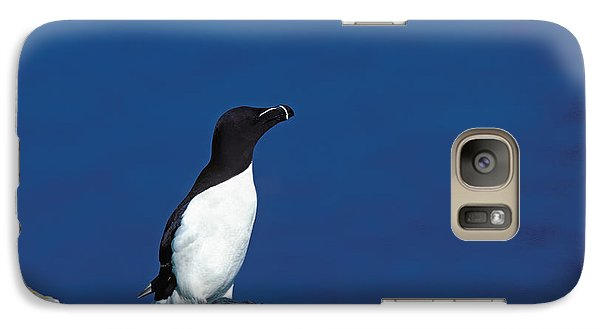 Razor-billed Auk Alca Torda Galaxy Case by Gerard Lacz