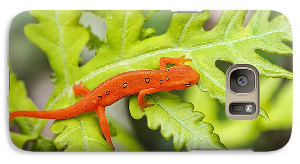 Red Eft Eastern Newt Galaxy Case by Christina Rollo