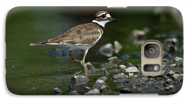 Killdeer  Galaxy Case by Douglas Stucky