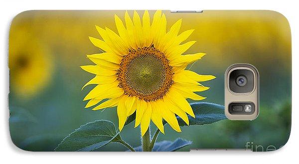 Sunflower Galaxy S7 Case by Tim Gainey