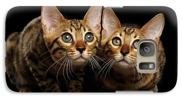Two Bengal Kitty Looking In Camera On Black Galaxy Case by Sergey Taran
