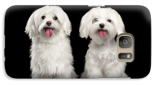 Two Happy White Maltese Dogs Sitting, Looking In Camera Isolated Galaxy Case by Sergey Taran