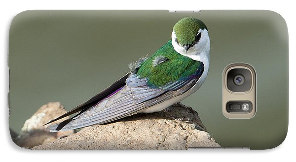 Violet-green Swallow Galaxy Case by Mike Dawson