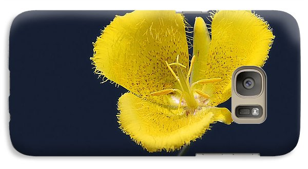 Yellow Star Tulip - Calochortus Monophyllus Galaxy Case by Christine Till