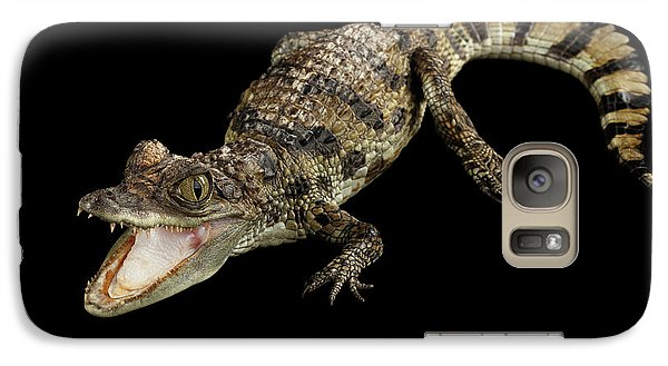 Young Cayman Crocodile, Reptile With Opened Mouth And Waved Tail Isolated On Black Background In Top Galaxy Case by Sergey Taran