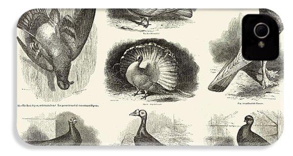 1868 Darwin Pigeon Breeds Illustration IPhone 4 / 4s Case by Paul D Stewart