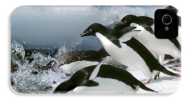 Adelie Penguins IPhone 4 / 4s Case by Art Wolfe
