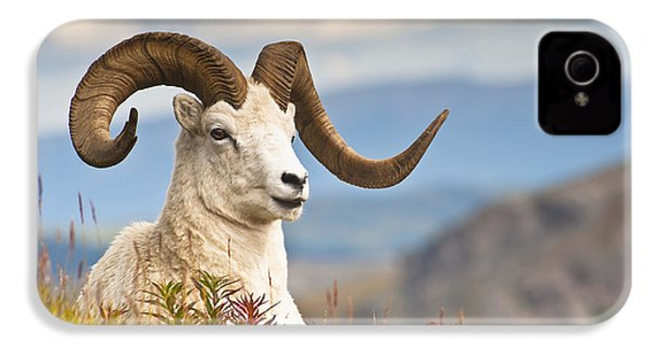 Adult Dall Sheep Ram Resting IPhone 4 / 4s Case by Michael Jones