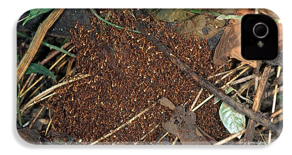 Army Ant Bivouac Site IPhone 4 / 4s Case by Gregory G. Dimijian, M.D.