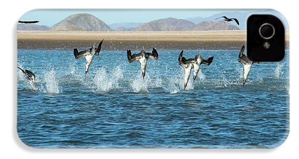 Blue-footed Boobies Feeding IPhone 4 / 4s Case by Christopher Swann