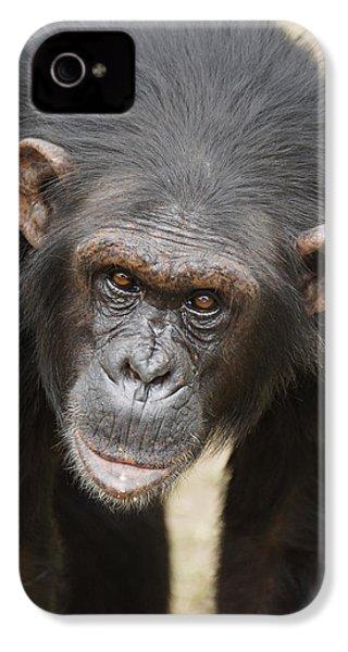 Chimpanzee Portrait Ol Pejeta IPhone 4 / 4s Case by Hiroya Minakuchi