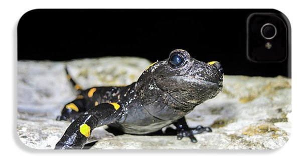 Fire Salamander (salamandra Salamandra) IPhone 4 / 4s Case by Photostock-israel