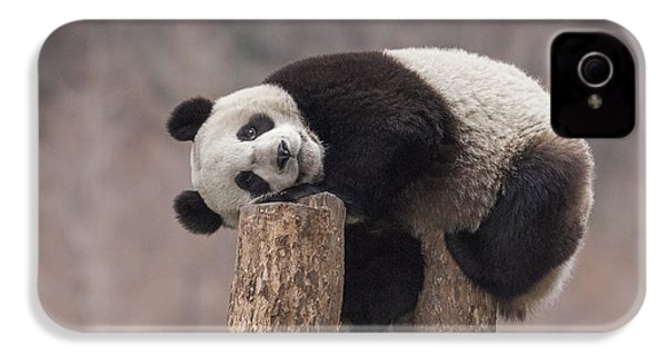 Giant Panda Cub Wolong National Nature IPhone 4 / 4s Case by Katherine Feng