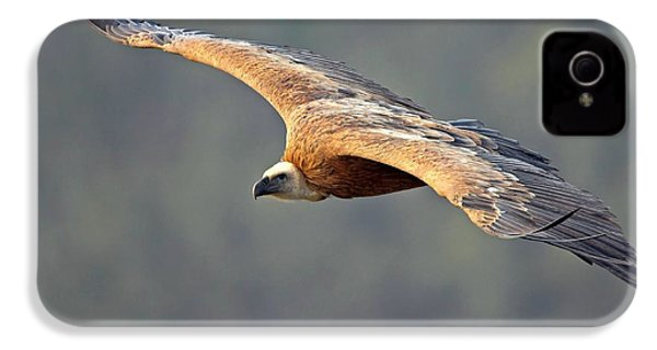 Griffon Vulture In Flight IPhone 4 / 4s Case by Bildagentur-online/mcphoto-schaef