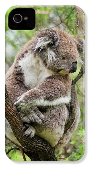 Koala (phascolarctos Cinereus IPhone 4 / 4s Case by Martin Zwick