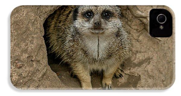 Meerkat IPhone 4 / 4s Case by Ernie Echols