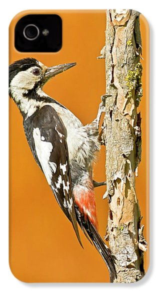 Syrian Woodpecker (dendrocopos Syriacus) IPhone 4 / 4s Case by Photostock-israel