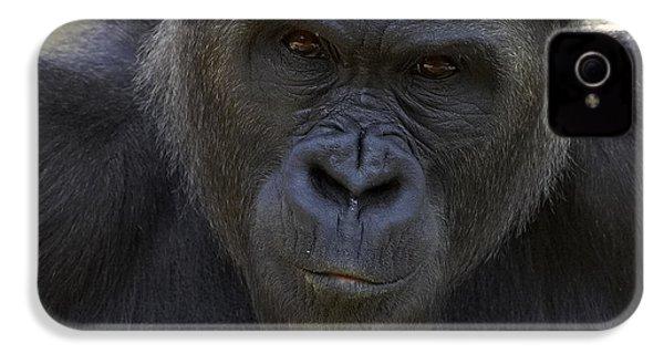 Western Lowland Gorilla Portrait IPhone 4 / 4s Case by San Diego Zoo