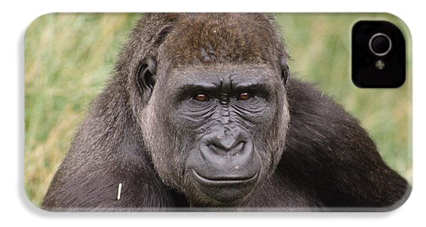 Western Lowland Gorilla Young Male IPhone 4 / 4s Case by Gerry Ellis