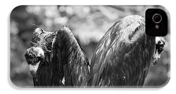 White-backed Vultures In The Rain IPhone 4 / 4s Case by Pan Xunbin